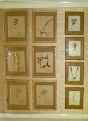 Bee botanicals
