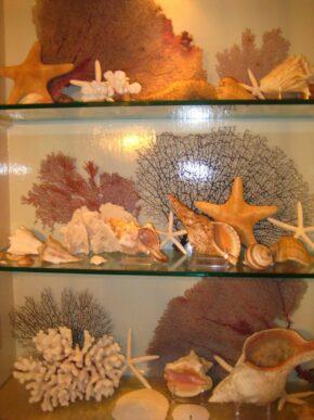 Bee shells