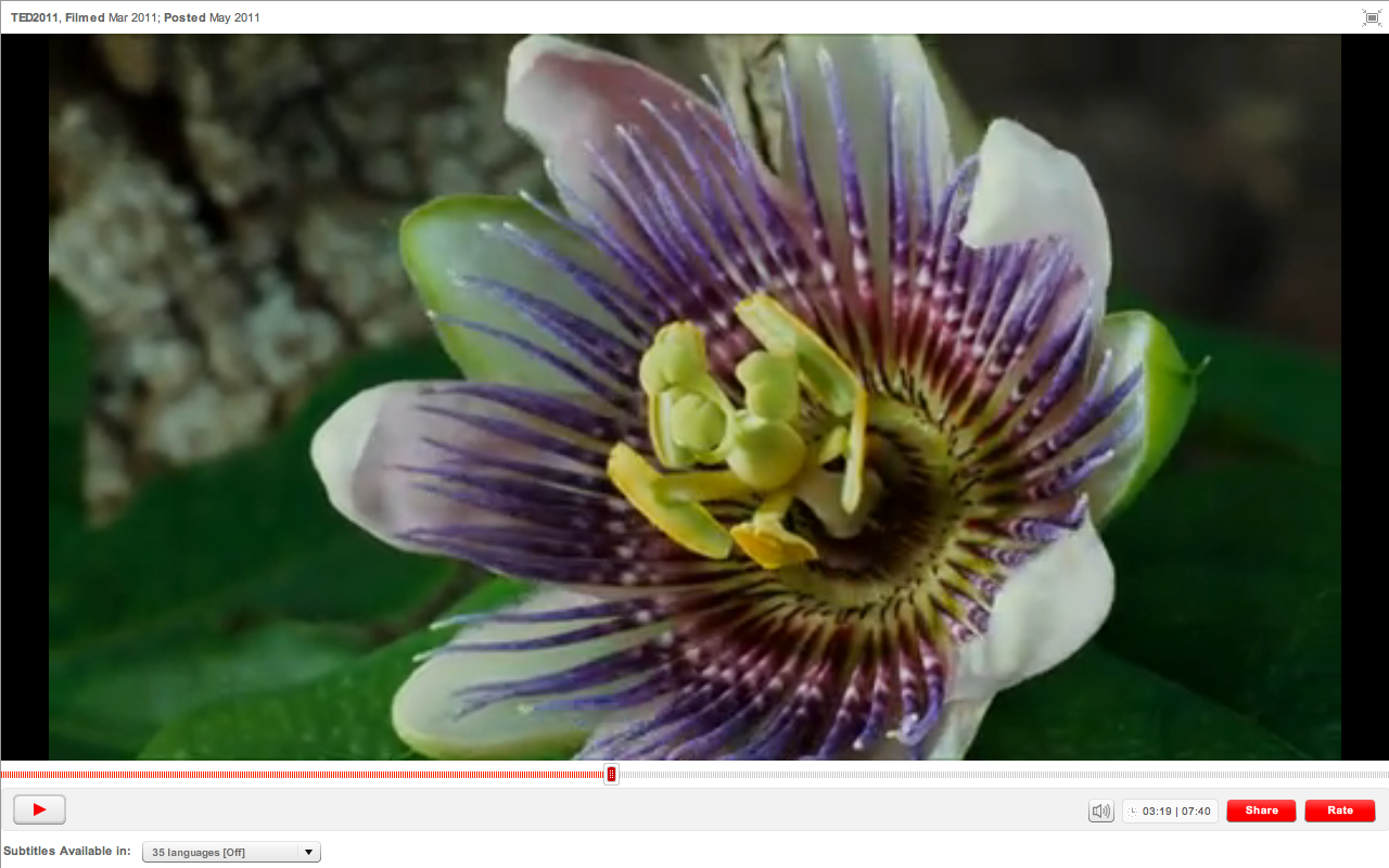 Beauty, Seduction, and Sex: a Stunning Video on Pollination