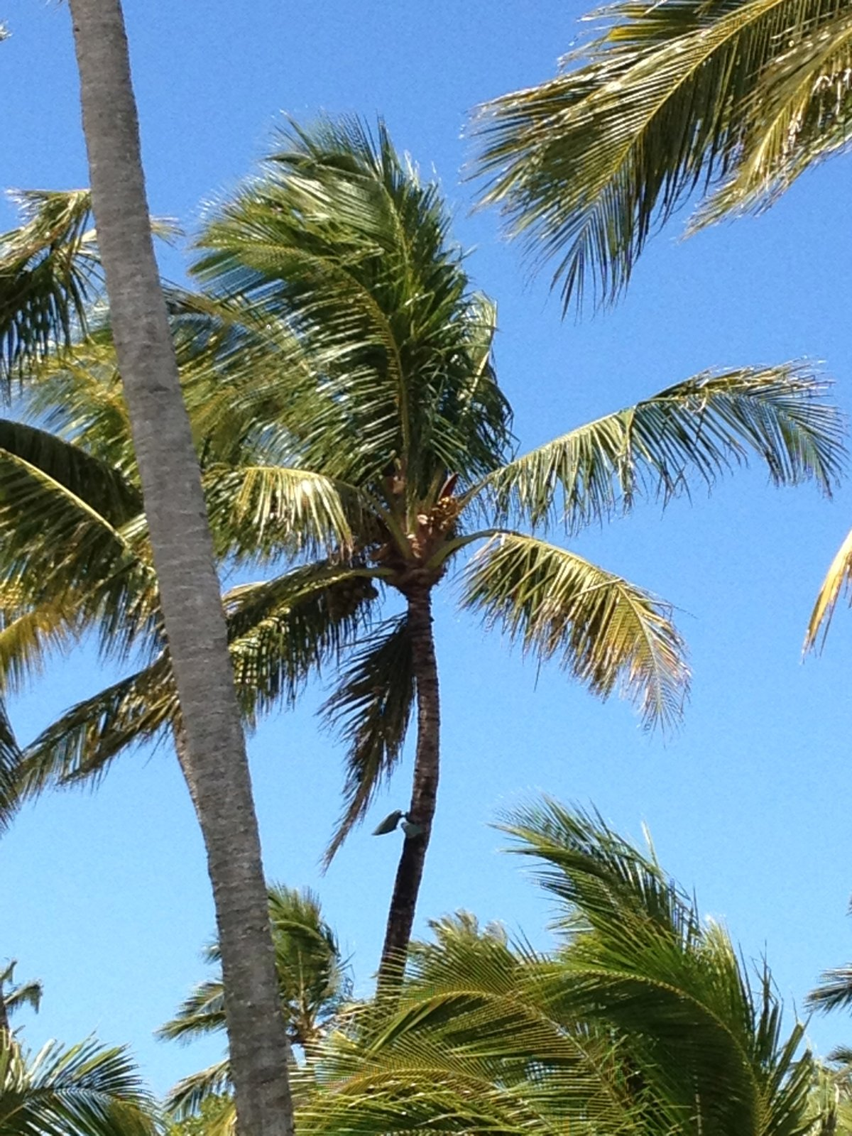 Bye-Bye Bahamas - Watercolor of Palm Trees