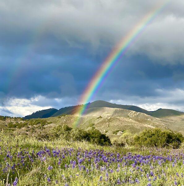 Rainbow over Rancho La Zaca IMG_2665